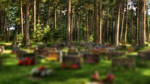 kalmistu, hdr, männid, hauaplaat, hauakivi, hauaplaadid, hauakivid, matused, surnuaed, disain,